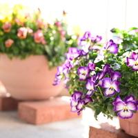 ぽかぽか陽気な春の日に♪春植えの植物で、ガーデニングをしませんか?