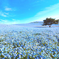この春、絵になる旅先へ。カメラを持って美しい風景に出会いに行こう