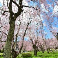 桜を追いかけて東北へ。〜買い物とレトロ建築と食も楽しめる盛岡散策〜
