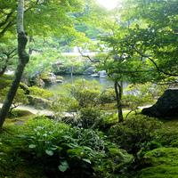 梅雨の時期が一番美しい☆青々とした苔を楽しめる京都のお寺6選