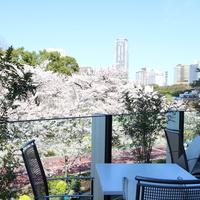 お花見気分で訪れたい♪ テラス席のある《桜が見えるカフェ@東京》