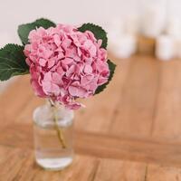【水切り・水揚げ】切り花が長持ちするコツを改めて知りたい!