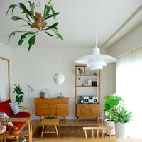 「吊るして楽しむ」植物がトレンド!すぐできるハンギングプランツの素敵な取り入れ方