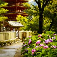 寺社と花の美しい競演。初夏の訪れを告げるアジサイの名所~奈良7選~