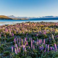 目も眩むほどの美しさ。いつか訪れてみたい、世界のロマンチックな花畑