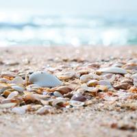キレイな海に会いにいこ♪ この夏、家族や友だちと訪れたい中部地方の海水浴場6選