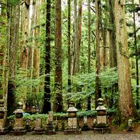 日本屈指のパワースポット「高野山」で、心も体も浄化される体験を。