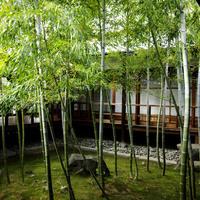 こころ洗われる体験を* 京都の[宿坊]に泊まってみよう