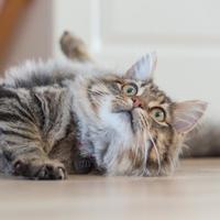 ニャンとも可愛い♪ ネコ用カメラアプリで「猫の自撮り」を撮ってみない?