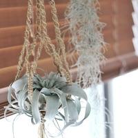新発想!植物はぶら下げるのもあり!空間を上手に使ったグリーン活用術