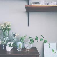お部屋の一角を植物園に。自分好みに観葉植物を飾ろう♪