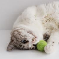 猫も飼い主さんも喜ぶ、インテリアとしても優秀なかわいい【猫グッズ】を集めました。