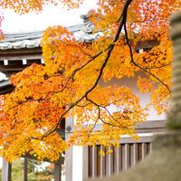 """秋冬の京都観光。-嵯峨野路を歩く""""わたしの京都旅""""-"""