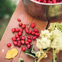 「赤い実」はビタミンCの宝庫。ローズヒップのある生活始めませんか?
