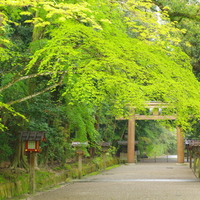 荘厳な雰囲気漂う日本最古の神社を訪れませんか ~奈良県・石上神宮のみどころ~
