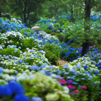 """雨の物語を紡ぎに。紫陽花をめぐる""""わたしの京都旅"""""""