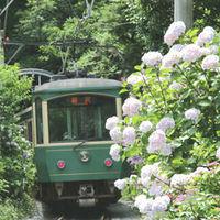古都鎌倉でアジサイ散策。絶景スポットと、併せて寄りたい周辺のおすすめカフェ