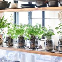 """インテリアグリーンで癒しの空間を。手軽にできる""""植物""""のステキな魅せ方&飾り方"""