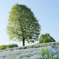 晴れたら行きたいね!のんびり緑に癒される「大きな公園&周辺おすすめスポット」in東京