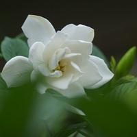 知ればもっと好きになる。季節に咲く花と、素敵な花言葉【夏篇】