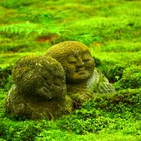 京都の奥座敷に佇む寺院。少し足を延ばし「三千院」を訪れてみませんか