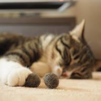 愛猫の毛をくるくる丸めてDIY♪「毛玉ボール」の作り方とおすすめブラシ