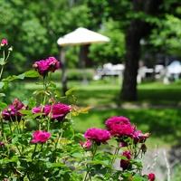 やっぱり夏は軽井沢。歴史と伝統を誇る避暑地を堪能する2泊3日の旅