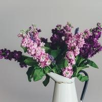 心もどんより、お家の中もよどんでる気が…。梅雨に美しく咲くお花でマジックをかけよ♪
