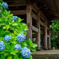 「あじさい寺」には朝一番に。美しい境内と和食処に癒される大人の北鎌倉散策へ