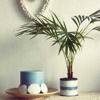 日陰のお部屋でもよく育つ。初心者さんにおすすめの観葉植物6選
