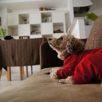 北欧&シンプルスタイルの部屋で楽しむ「犬のいる暮らし」