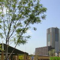 住みたい街ランキングで注目の「武蔵小杉」。ランチとディナーのおいしいお店をご紹介