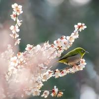 桃色に包まれた景色に魅せられよう…近畿地方(奈良・和歌山・三重)での梅の名所7選