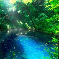 陽射しを浴びて輝く湖沼群を見に行きませんか?世界遺産白神山地「十二湖」のみどころ