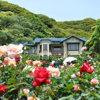 バラの季節が来た♪今が見ごろ!「鎌倉文学館」のバラを見に行こう☆