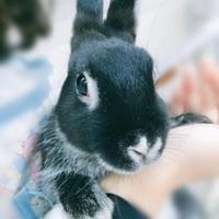 """都心で可愛い動物に会える!リピーターになっちゃう""""動物カフェ""""案内"""