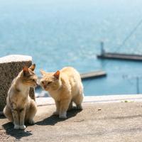 「島時間」に身をゆだねて過ごす旅。日本の離島へ出かけてみませんか。