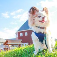 愛犬といっしょに旅行をしよう。関東近郊の『犬と泊まれる宿』3選