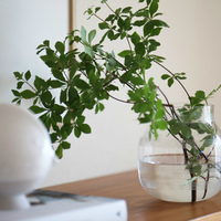 """""""フレッシュグリーン""""で夏のインテリアを爽やかに♪『植物』の涼しげな見せ方・飾り方"""