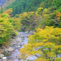 【四国地方】日本で最も美しい村  ~徳島県上勝町編~