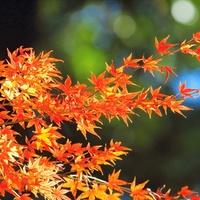 小さい「秋」を見つけに行きませんか?『東京近郊』おすすめ紅葉スポット&周辺カフェ