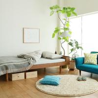 北欧インテリアにぴったりのグリーンをお部屋に【簡単な育て方ガイド付き】