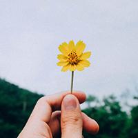 頑張らなくても大丈夫。今日からできる、私らしい「丁寧な暮らし」の始め方