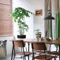 お部屋の所々に植物を。観葉植物を上手に取り入れたインテリアまとめ