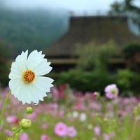 """秋の花咲く里山で。懐かしい風景と出会う""""わたしの京都旅"""""""