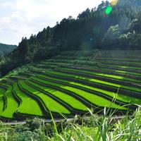 【九州地方】日本で最も美しい村~福岡県星野村編~