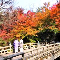 秋の風情を感じたくて。紅葉・スイーツ・歴史…五感で愉しむ『金沢の大人女子旅』