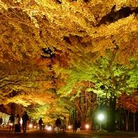 秋の彩りに魅せられて ~北海道の紅葉名所/札幌・札幌近郊編~