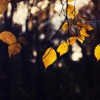 秋の夜長はやさしい音楽でリラックス。しっとり優雅な気分に浸れる「ピアノ曲」5選