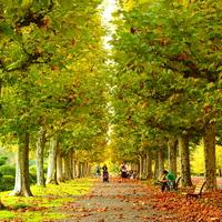 ゆったり秋を感じよう。一度は訪れたい都内の庭園巡りガイド*
